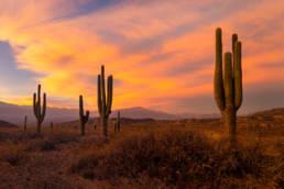 Argentinien Los Cardones Nationalpark Sonnenuntergang Kandelaberkakteen