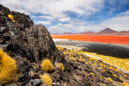 Bolivien Laguna Colorada Rote Farbe Flamingos