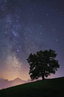 Deutschland Allgäu Einsamer Baum Füssen Milchstraße