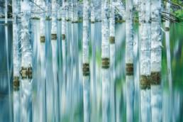 Kasachstan Kolsai Nationalpark Kaindysee Tienshan Fichten