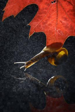Makro Schnecke Wasser Spiegelung Blatt