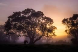 Neuseeland Nebel Sonnenaufgang Einsames Pferd